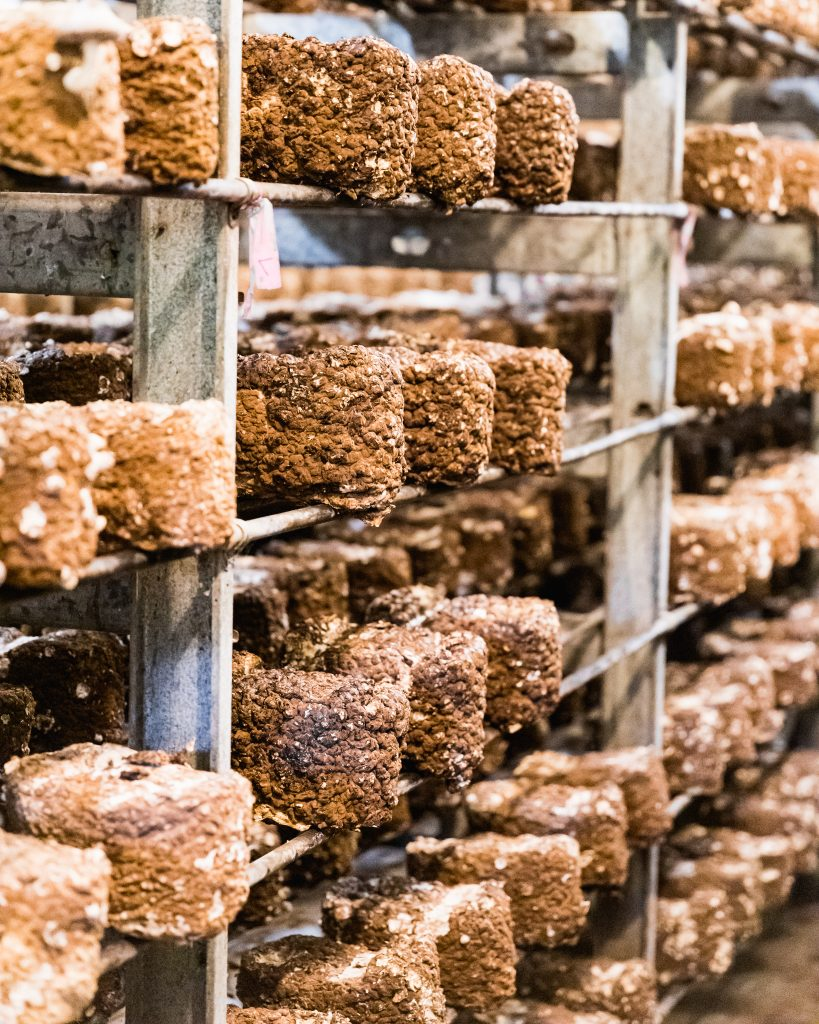 Shiitake Mushroom Blocks