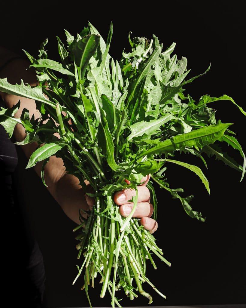 Bunch of dandelion greens
